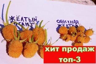 Малина Жёлтый Гигант