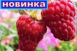 Малина Радзиёва